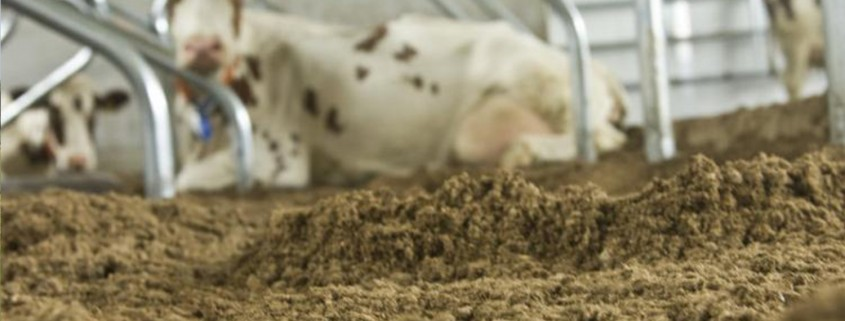 mestscheider diep strooisel koeien